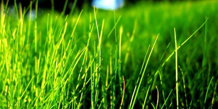 """Imagem ilustrativa. """"A grama é verde"""""""
