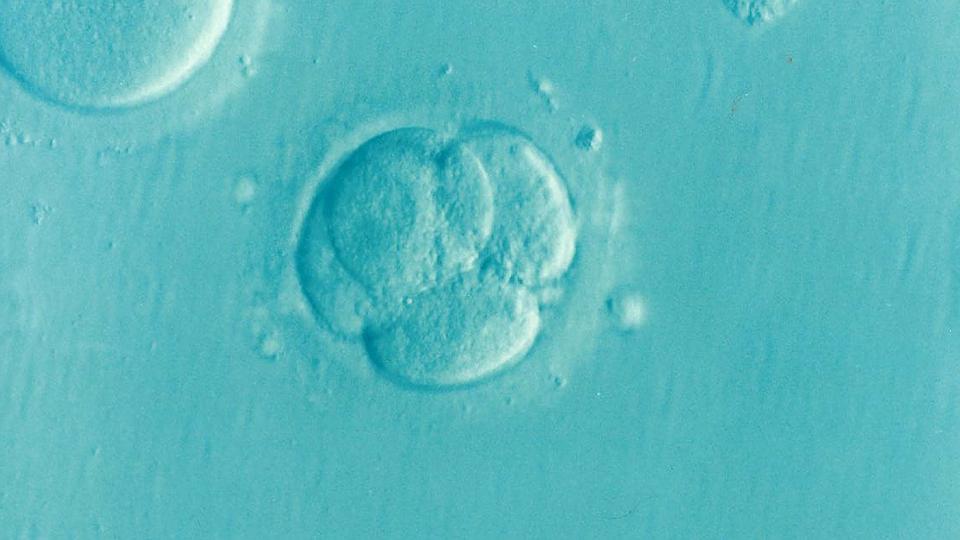 Autonomia do embrião pré - implantação: experimentos recentes